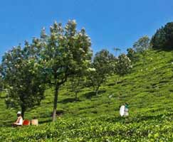 Package Tour To Coonoor